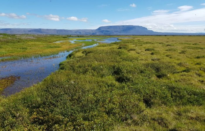 The Framengjar Wetlands by Lake Mývatn. Photo by Viðar Hreinsson